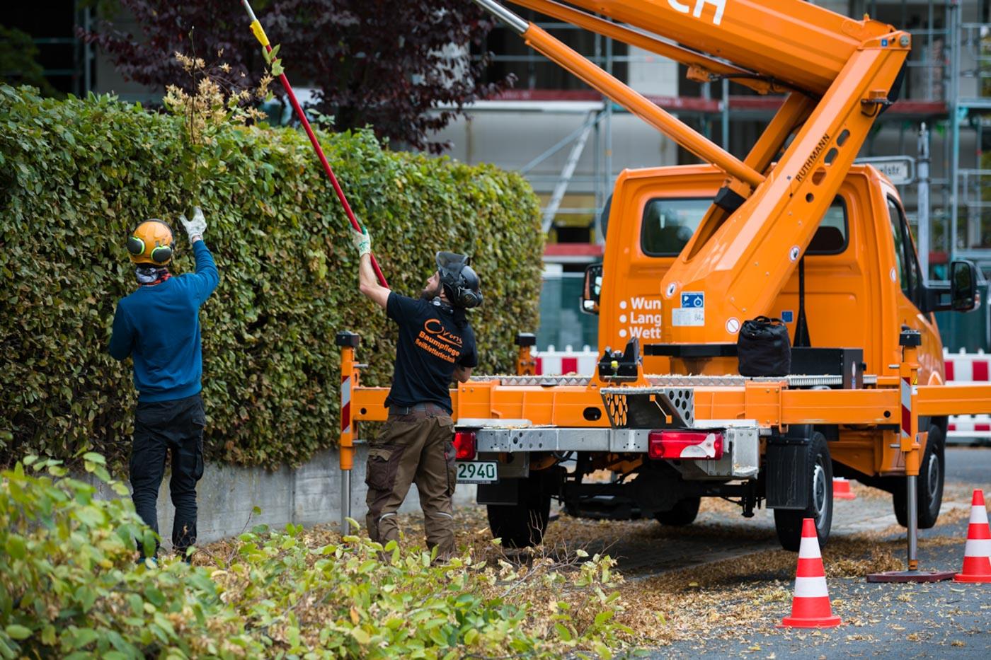 Baumpflege mit Hebebühne und Telesskopschere