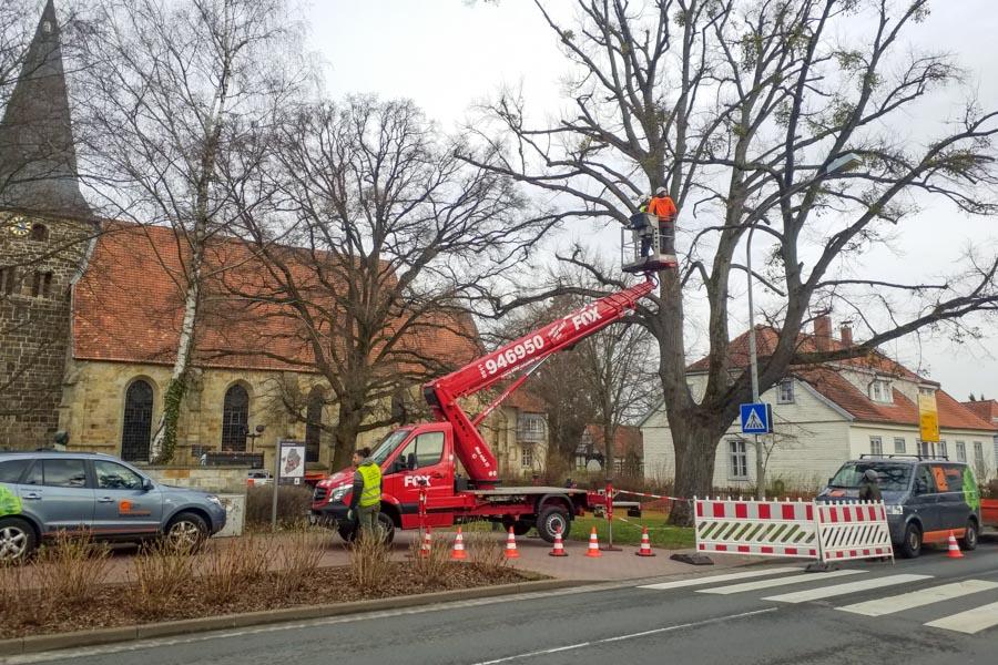 Baumkataster Baumpflege